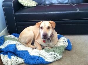 joey-office-dog